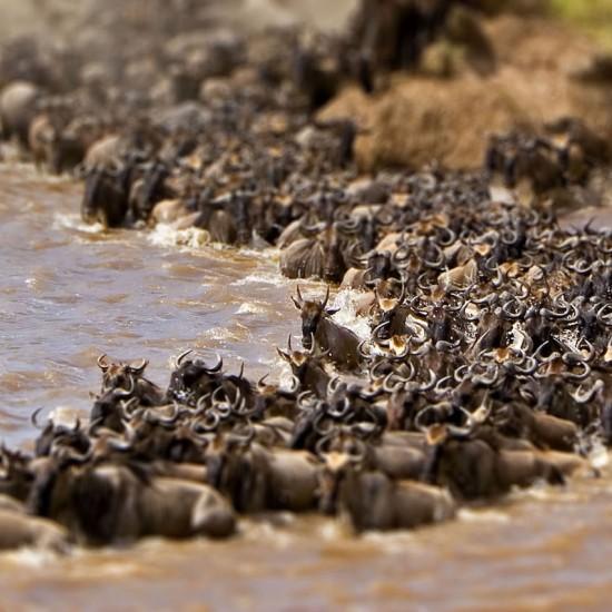 wielka migracja