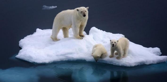 arctic-spitsbergen-polar-bear-and-cubs-db_1b6a81c452fd974f314a00f335415e99