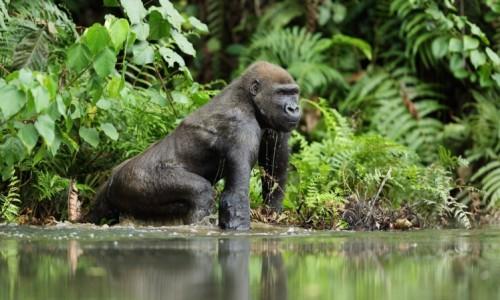Loango-National-Park-Gabon--e1447449310909