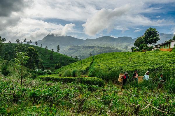 Sri-Lankan-photography-inspiration12