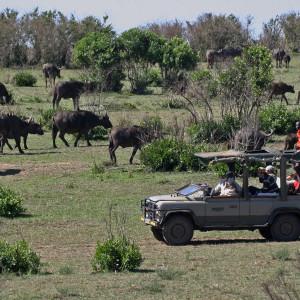 safari z Mk Tramping