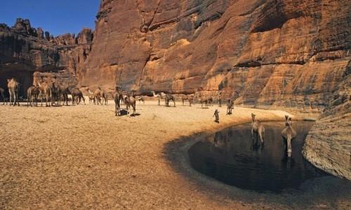 Guelta d'Archei15