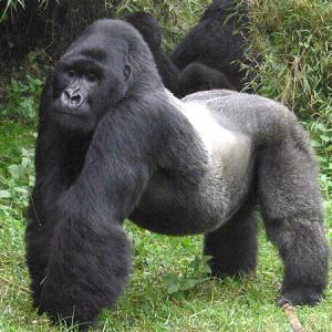 Kamerun afryka