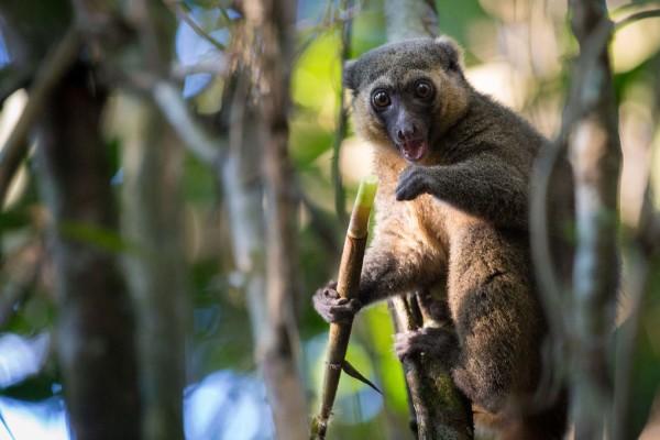 Madagaskar PN Ranomafana