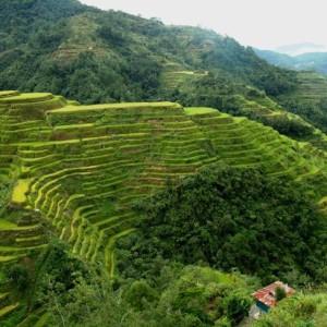 Longhsheng tarasy