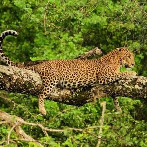 Parki Narodowe Sri Lank2
